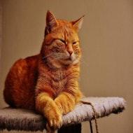 Kitty Calm