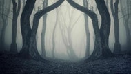 Strelley Hall Ghost Hunt